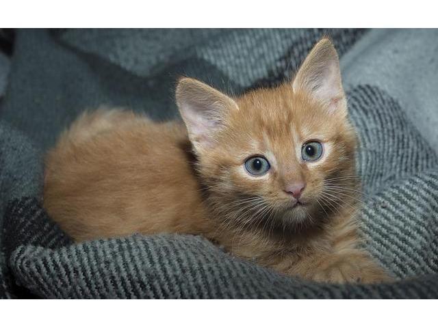 Animal Shelters In Washington State